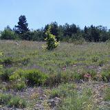 Biotope de Papilio alexanor et de Parnassius apollo provincialis. Lagarde d'Apt, 1200 m (Vaucluse), 28 juin 2015. Photo : J.-M. Gayman