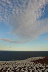 NEIGE ET NUAGES Les fous de bassan de l'Ile Bonaventure, en Gaspésie, dans le Golfe du St Laurent