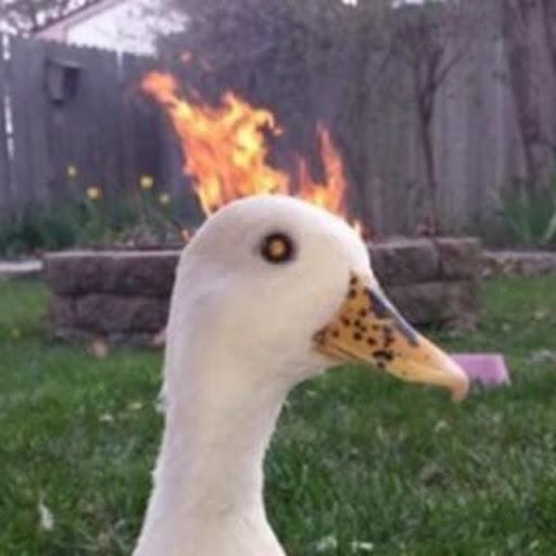 zuzoner