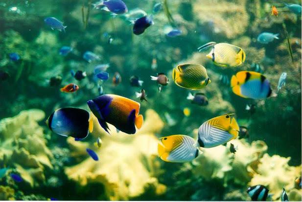 Ngắm cá cảnh tốt cho sức khỏe