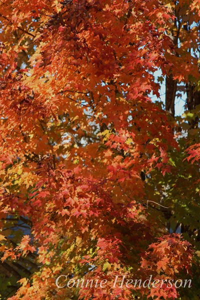 Oct 1 2015 Kathys trees