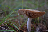 """Mushroom Portrait"" by Sita Thompson -- 2nd Place Digital Special ""B"" Group"