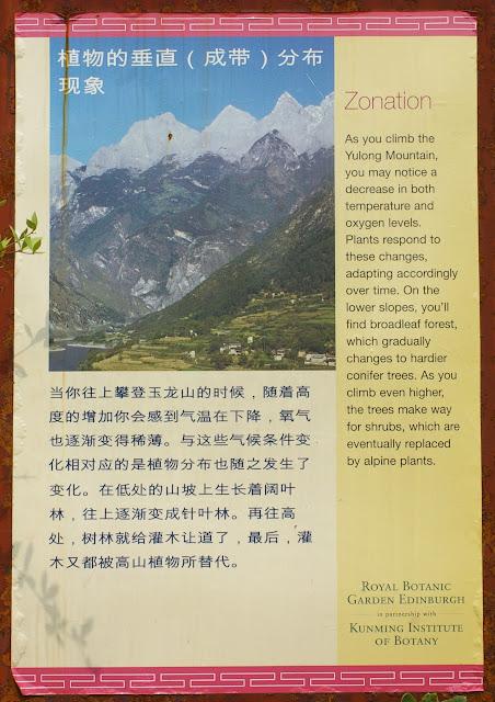 Au début (2600 m) du sentier conduisant à la station botanique de Yulong (3200 m), 17 août 2010. Photo : J.-M. Gayman