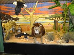 2015.12.07-014 lions