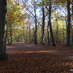 Forêt domaniale de la Grange