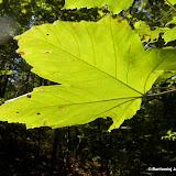Barwy jesieni cz. 3: Uroczysko Górka Pychowicka i okolice