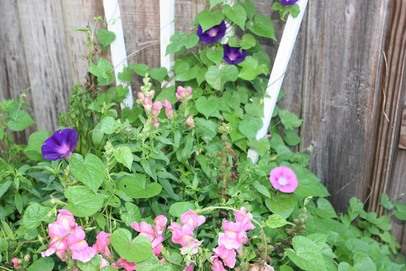 Gardening 2012 - IMG_3121.JPG