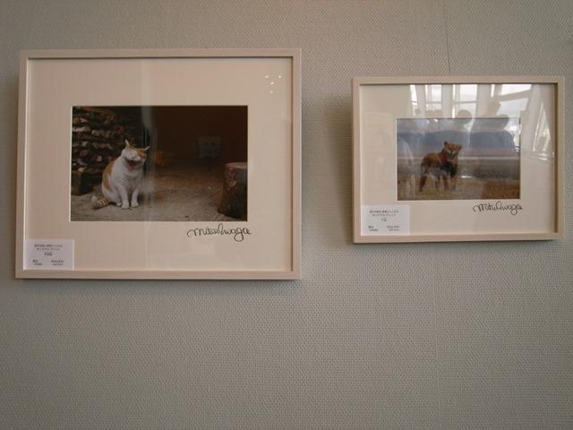 秋田県立近代美術館ネコライオン