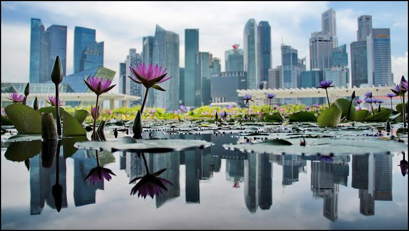 Singapore di Delvecchio Dario