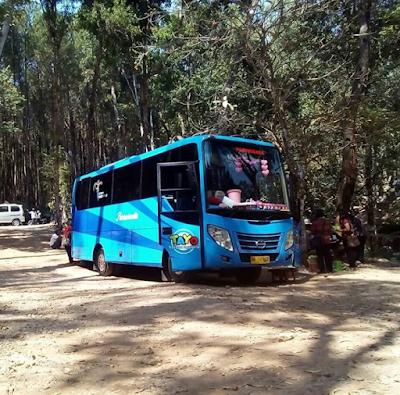Sewa Bus Solo Tujuan Hutan Pinus Mangunan