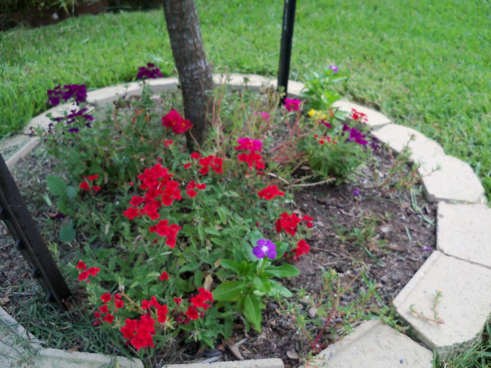 Gardening 2010, Part Three - 101_5230.JPG
