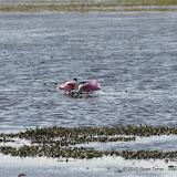 04-06-12 Myaka River State Park - IMGP9924.JPG