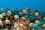Diving_9.jpg