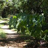 Biotope humide avec, à gauche, un marais peuplé (selon les pancartes) de jacares. Ilha Grande (RJ), 18 février 2011. Photo : J.-M. Gayman