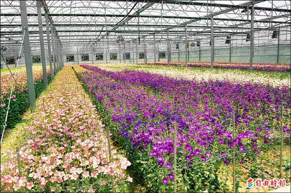 雲林縣鄉鎮特產-農漁畜與花卉資訊