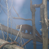 Zoo Snooze 2015 - IMG_7200.JPG
