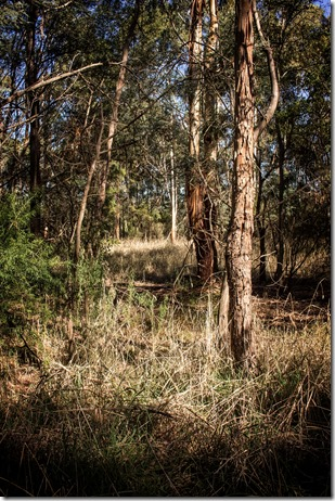 Typical Australia Open Forest