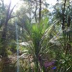 Plant on Elvina Track (304587)