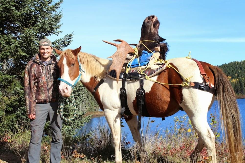 Transport d'un buck par cheval