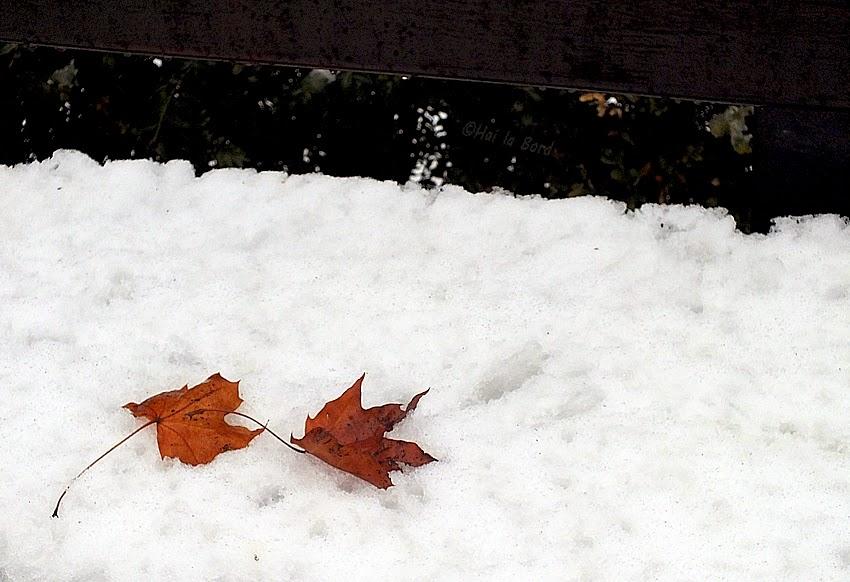 frunze pe zapada zoo piatra neamt