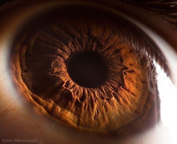human eyes 1 (10)