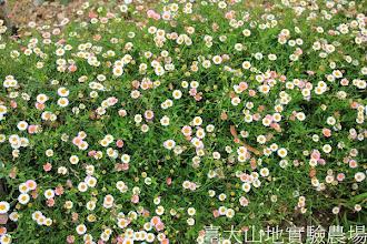 Photo: 拍攝地點: 梅峰-一平臺 拍攝植物: 墨西哥飛蓬 拍攝日期:2013_09_28_FY