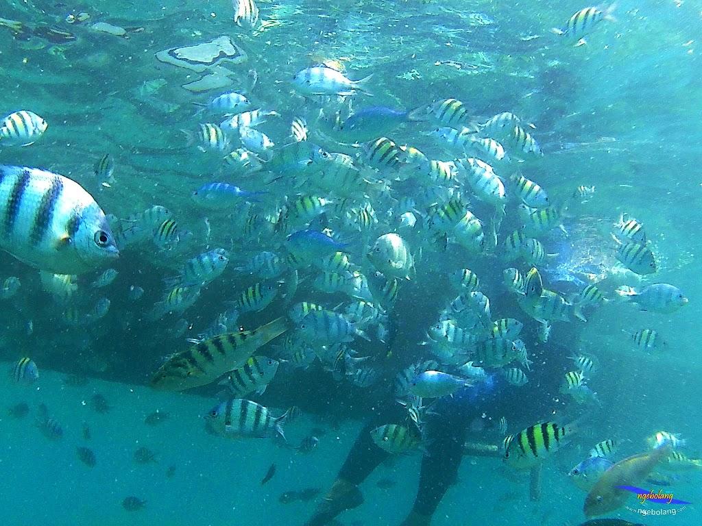 pulau harapan, 5-6 september 2015 skc 019