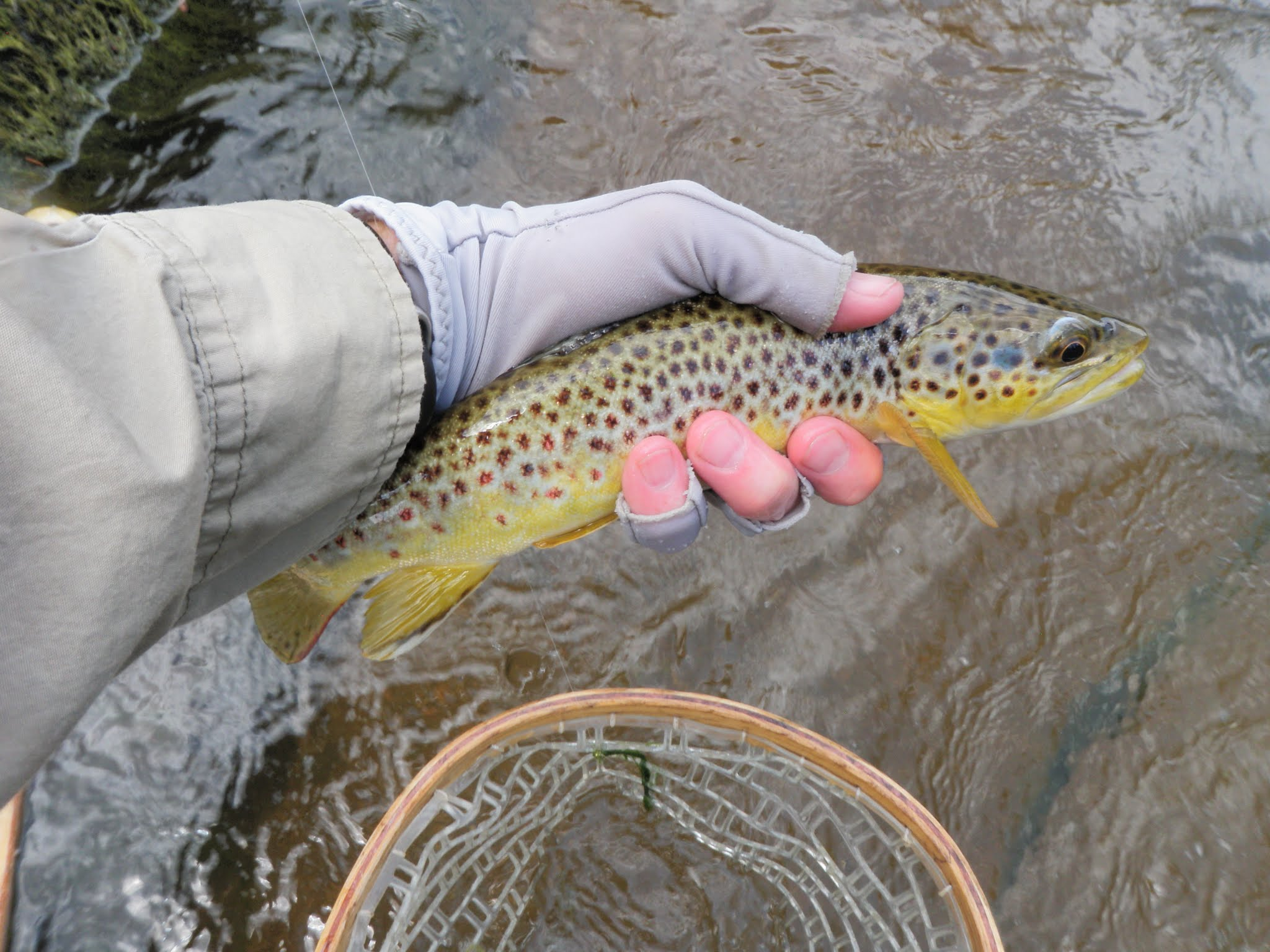 South platte river 08 28 2015 dave weller 39 s fly for Trout fishing spots near me