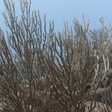 Bonaire 2011 - PICT0049.JPG