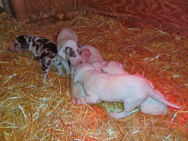 Graysee's babies @ 3 weeks