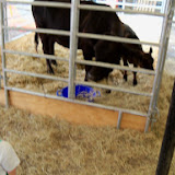 Fort Bend County Fair 2014 - 116_4209.JPG