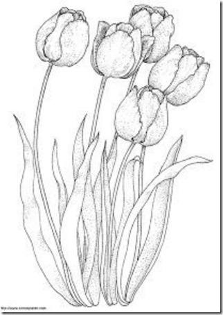 flores masdibujos  (55)