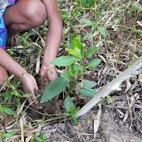 Projeto Betari - Recuperação da Mata Ciliar do Rio Betari (plantio dez/14)
