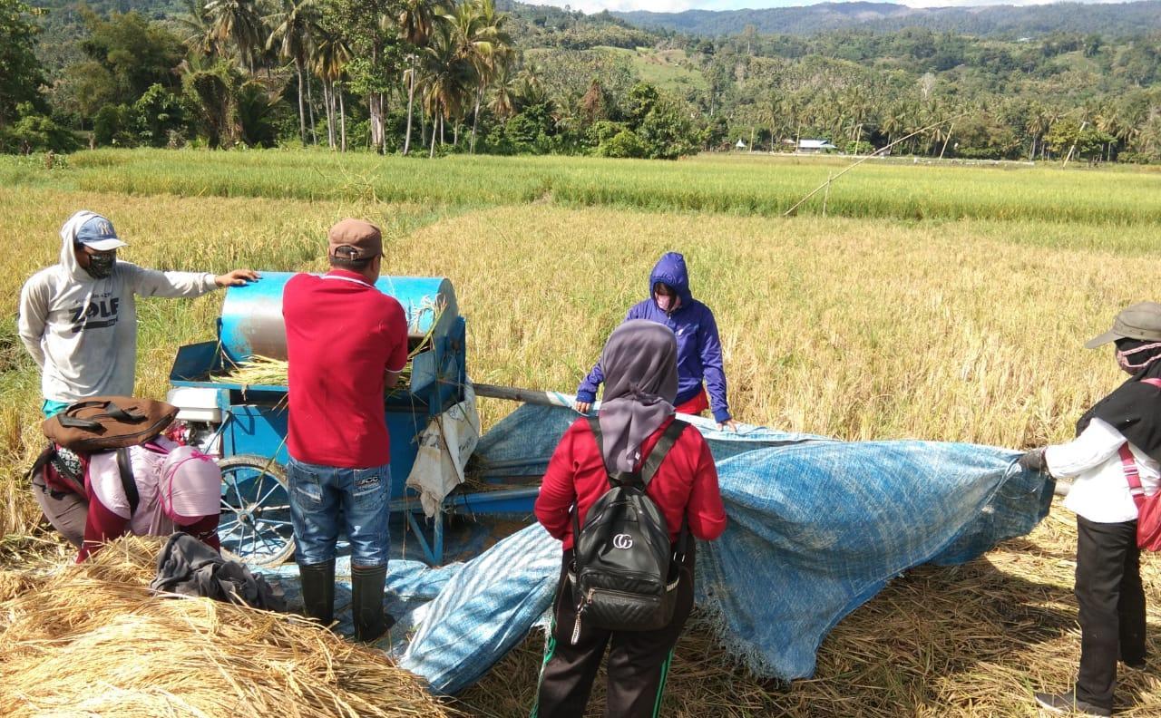 Kadis Pertanian Tojo Una-Una Semangati petani  Terus Bergerak Panen Padi Untuk Ketersediaan Pangan