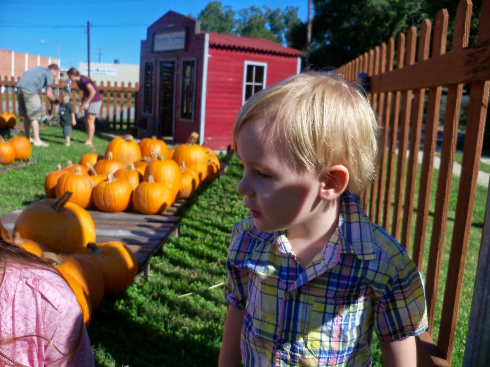 Pumpkin Patch 2014 - 116_4469.JPG