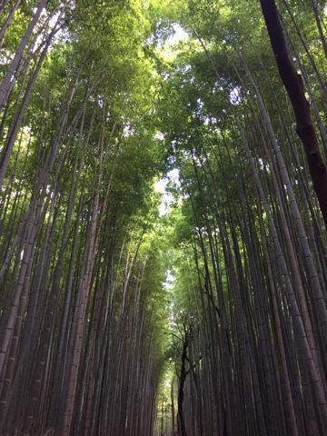 The famous bamboo grove in Arashiyama, Kyoto