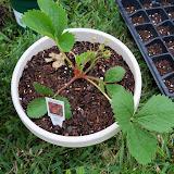 Gardening 2010 - 101_0302.JPG