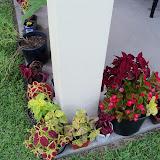 Gardening 2010, Part Three - 101_4912.JPG