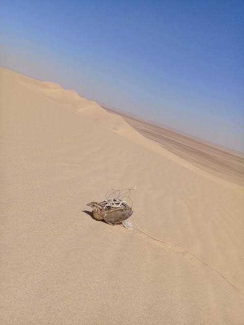 صيد الصقور مصر  مطروح
