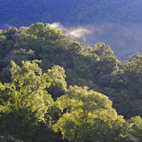 Lumières matinales. Mount Totumas, 1900 m (Chiriquí, Panamá), 22 octobre 2014. Photo : J.-M. Gayman