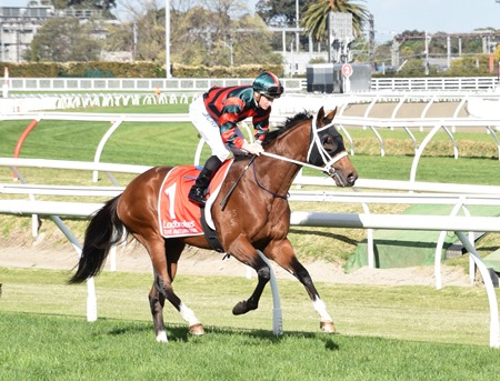 caulfield guineas_the autumn sun 10