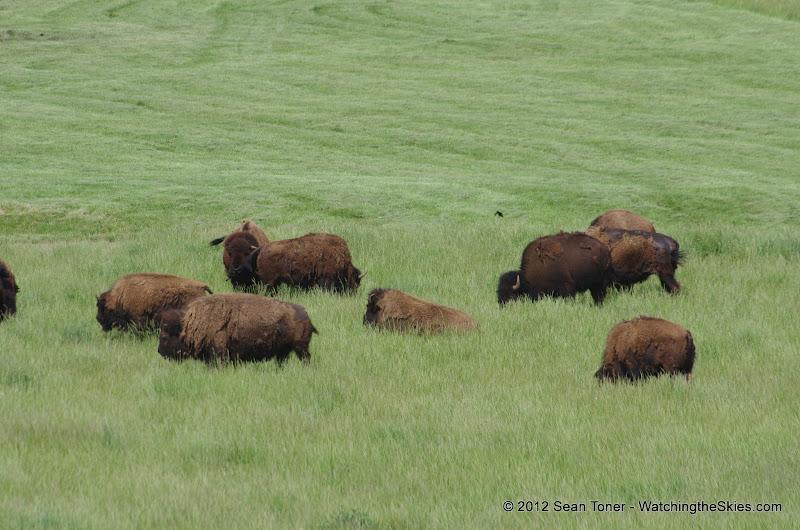 05-11-12 Wildlife Prairie State Park IL - IMGP1557.JPG