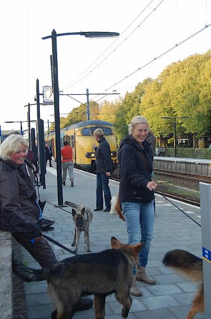 KNON pups in de stad 09-2011 - DSC_0049.JPG