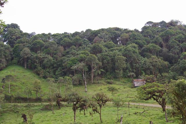 Cloud Forest au-dessus de Nanegalito, 2000 m (Pichincha, Équateur), 12 décembre 2013. Photo : J.-M. Gayman