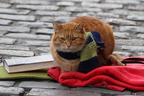 1fcda-um-gato-de-rua-chamado-bob