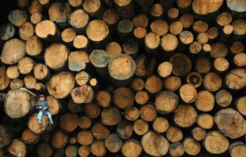 Deforestazione... di utente cancellato