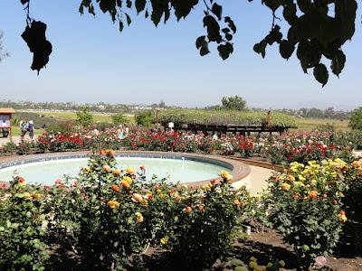 Mange rosebusker og en dam.