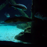 Downtown Aquarium - 116_3907.JPG