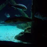 Downtown Aquarium - 116_3907.JPG