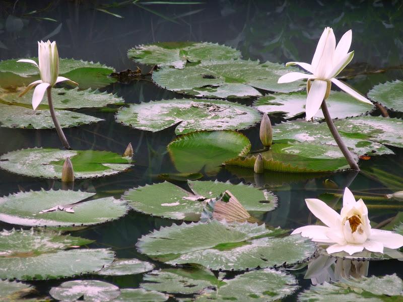 TAIWAN.Taipei. Dans le jardin de lune des nombreuses résidence présidentielle de CKS - P1050066.JPG